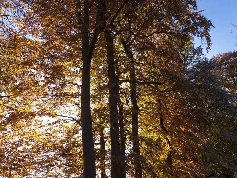 Sous les arbres 2012-10-27_Arbre_Contre-jour